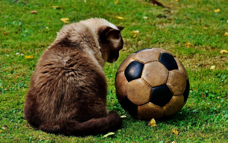 Fußballbild3