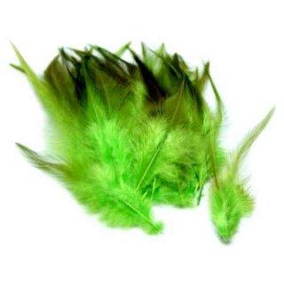 Grün gefärbte Federn im Pack zu 50 Stück 10-15cm